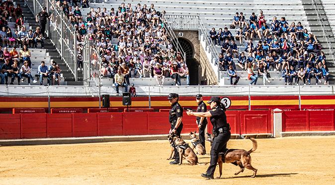 Exhibición de Guías Caninos en Plaza de Toros de Almería con motivo de los actos del Patrón de Policía Nacional.